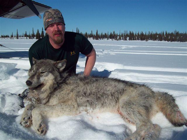Blue wolf viagra